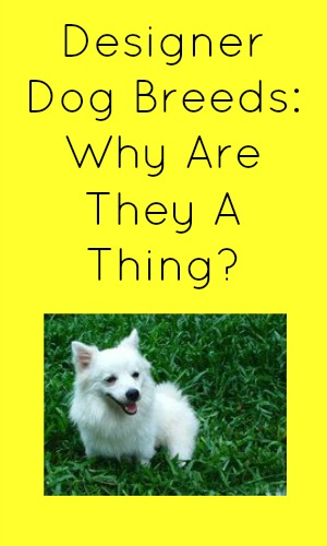 Designer Dog Breeds: Why Are They A Thing?