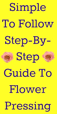 Pressed Flowers: A How To Guide