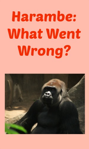 Harambe: What Went Wrong?