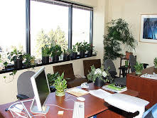 Top 5 Low Maintenance Plants For Your Work Space